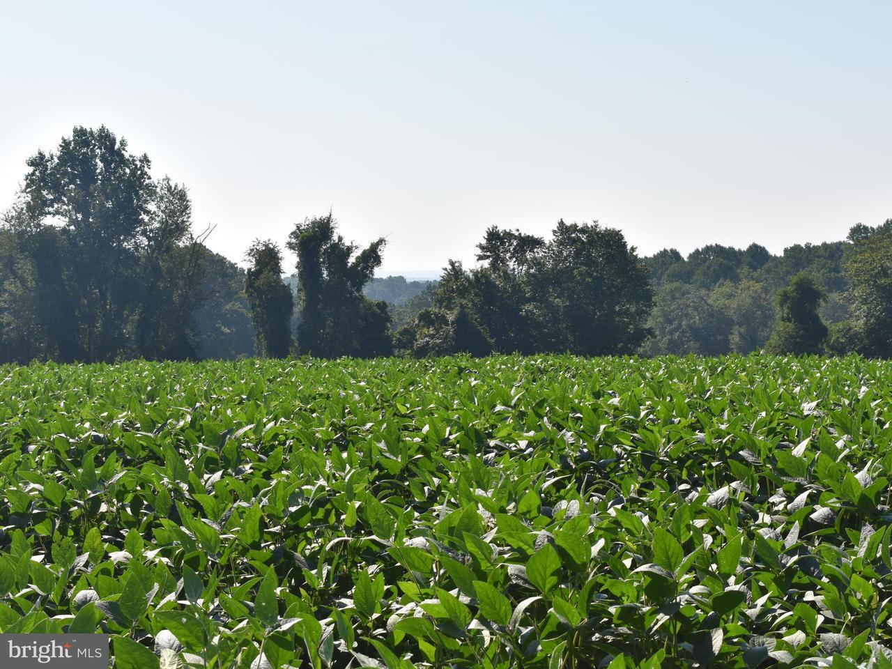 土地,用地 为 销售 在 16518 Cedar Grove Road 16518 Cedar Grove Road Sparks, 马里兰州 21152 美国
