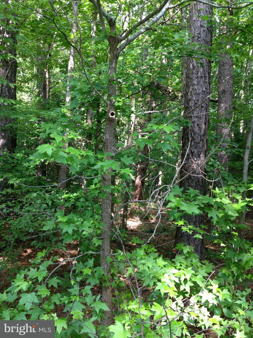 Land for Sale at 0 Not On File Hague, Virginia 22469 United States