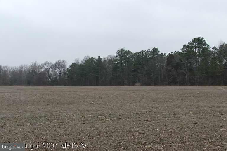 Land for Sale at Maple Branch Lane Trappe, Maryland 21673 United States
