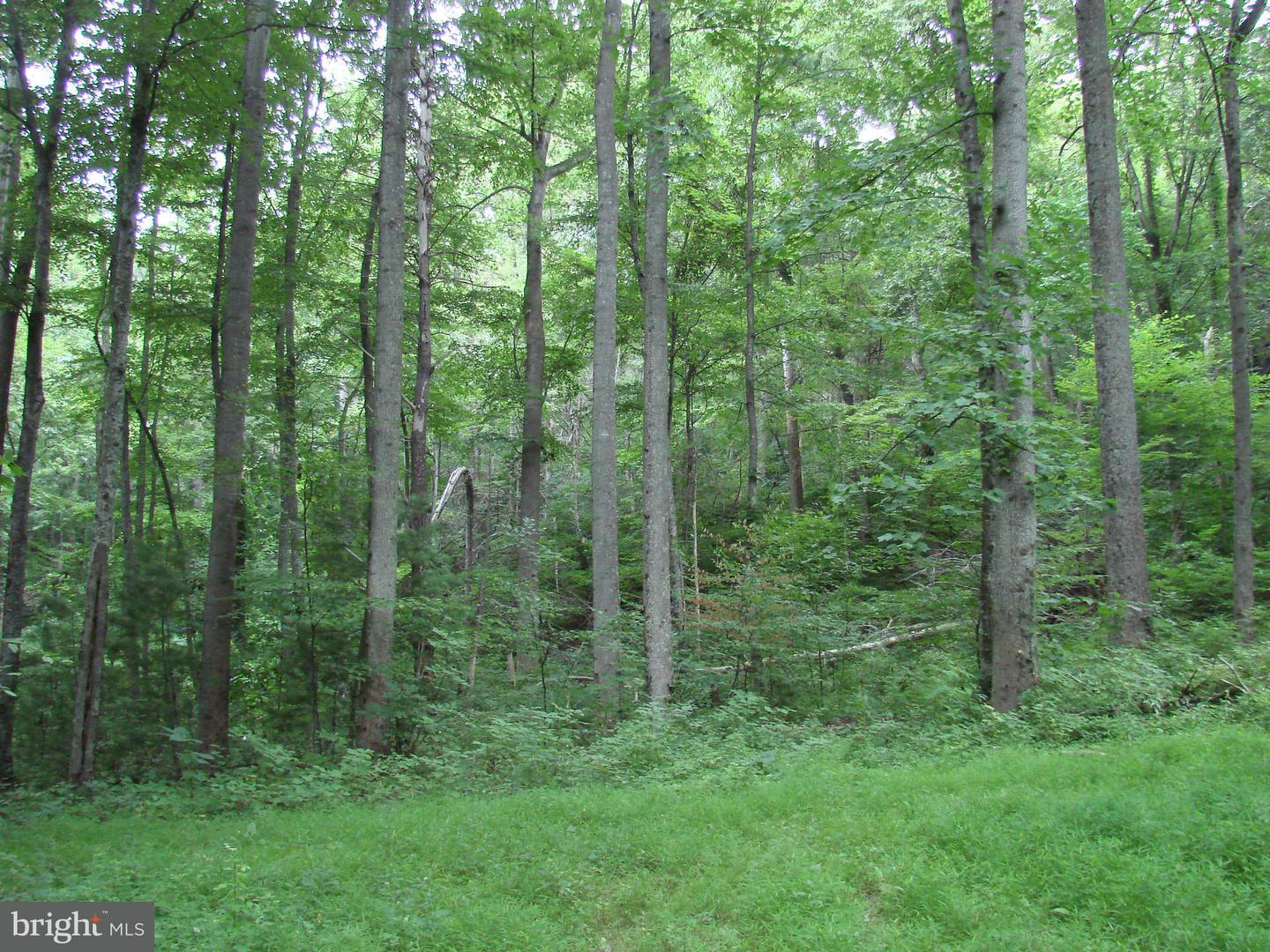 Land for Sale at Off Printz Mill Rd. Luray, Virginia 22835 United States