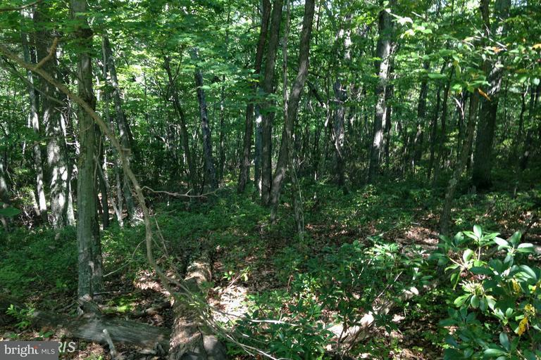 Land for Sale at 7 High Knob Rd Old Fields, West Virginia 26845 United States