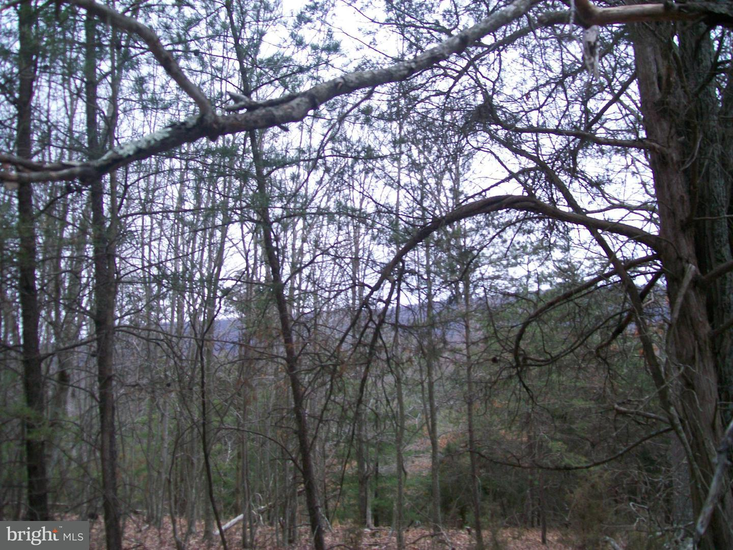 Additional photo for property listing at Proctor Rd  Purgitsville, West Virginia 26852 United States