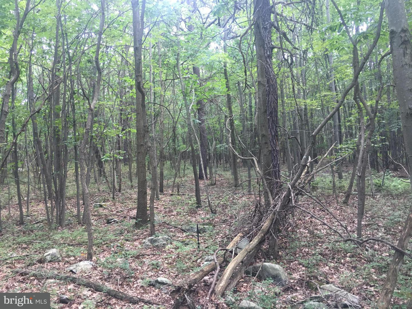 Land for Sale at Lot 10 Sherman Valley Road Hopewell, Pennsylvania 16650 United States