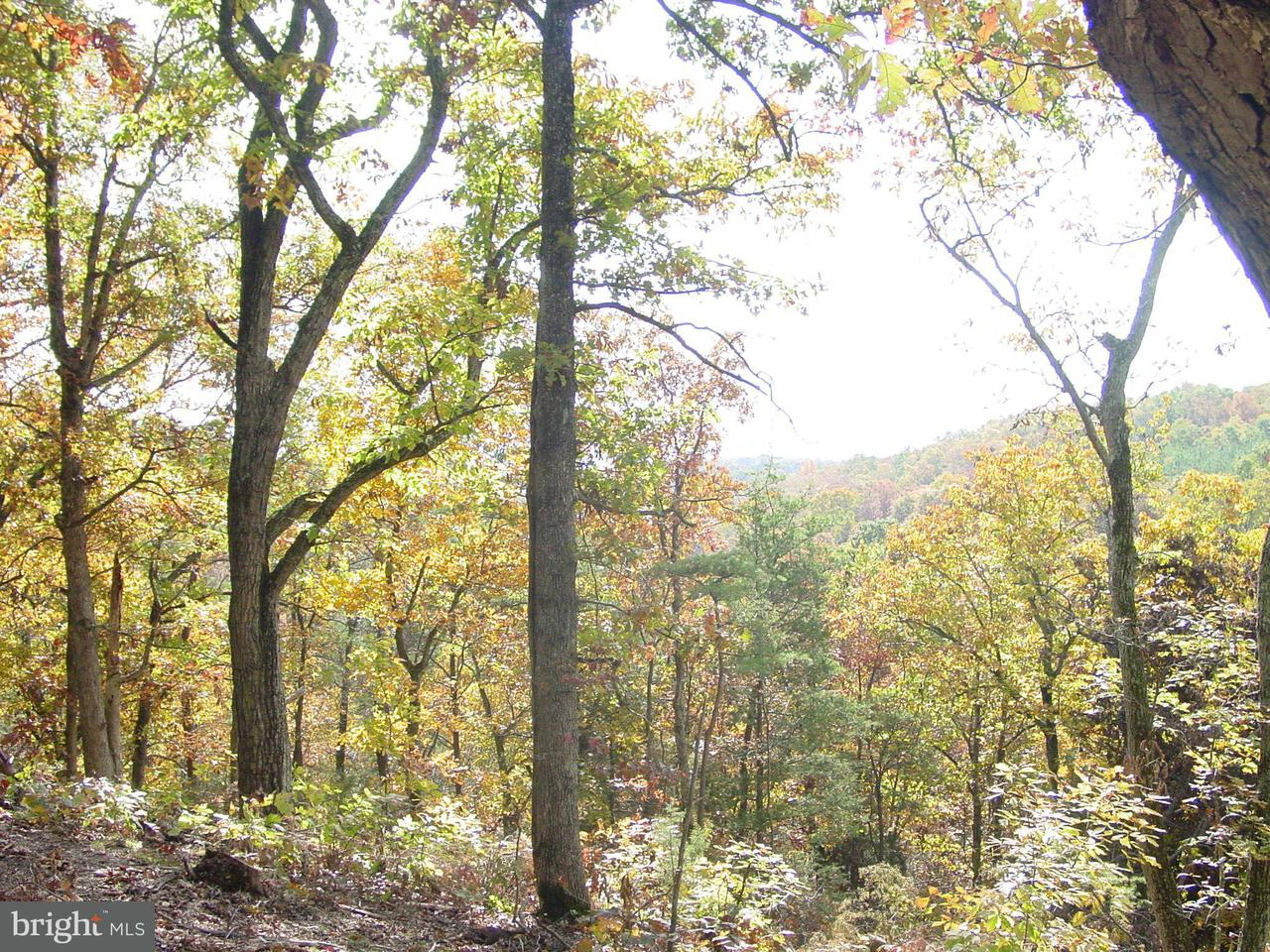 Land for Sale at Oak St Stephens City, Virginia 22630 United States
