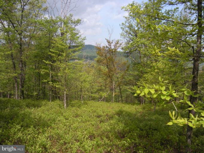 Land for Sale at Farm #19 Bear Garden Trl Capon Bridge, West Virginia 26711 United States