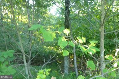 Land for Sale at 1112 Off I L Pugh Rd Bloomery, West Virginia 26817 United States