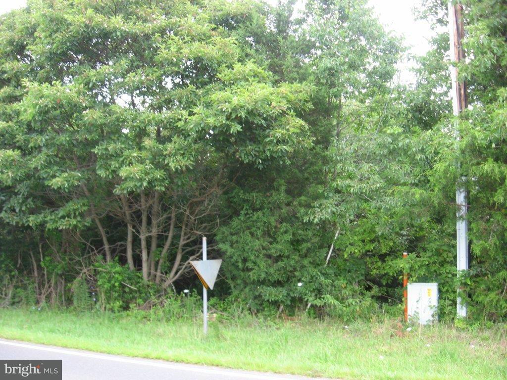 Land for Sale at Senedo Rd. Mount Jackson, Virginia 22842 United States