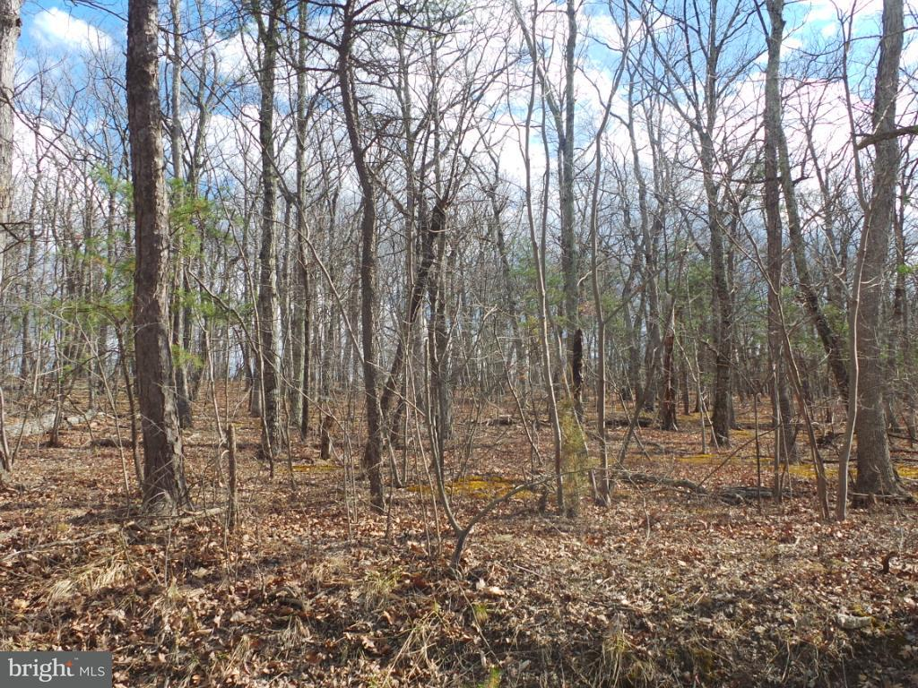 Land for Sale at 2 Buckys Lane Berkeley Springs, West Virginia 25411 United States