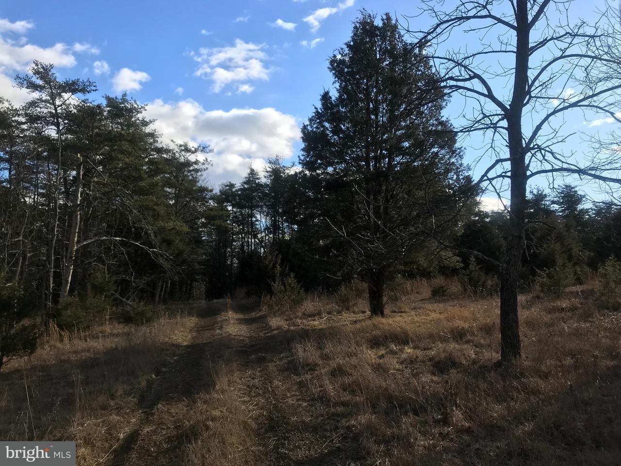 Land for Sale at Patterson Creek Rd Burlington, West Virginia 26710 United States