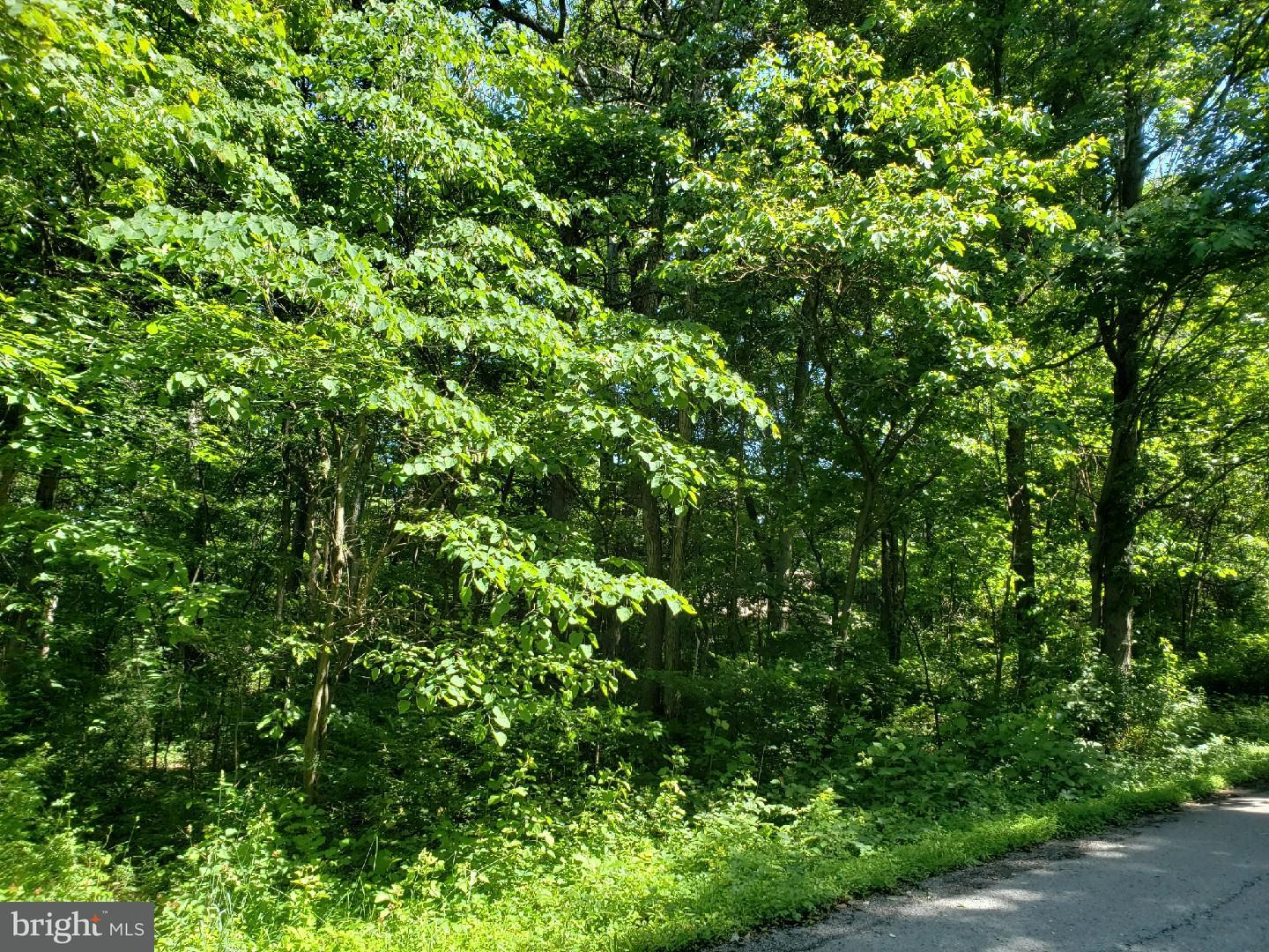 Land for Sale at 0 Blacks Mountain Road Waterfall, Pennsylvania 16689 United States