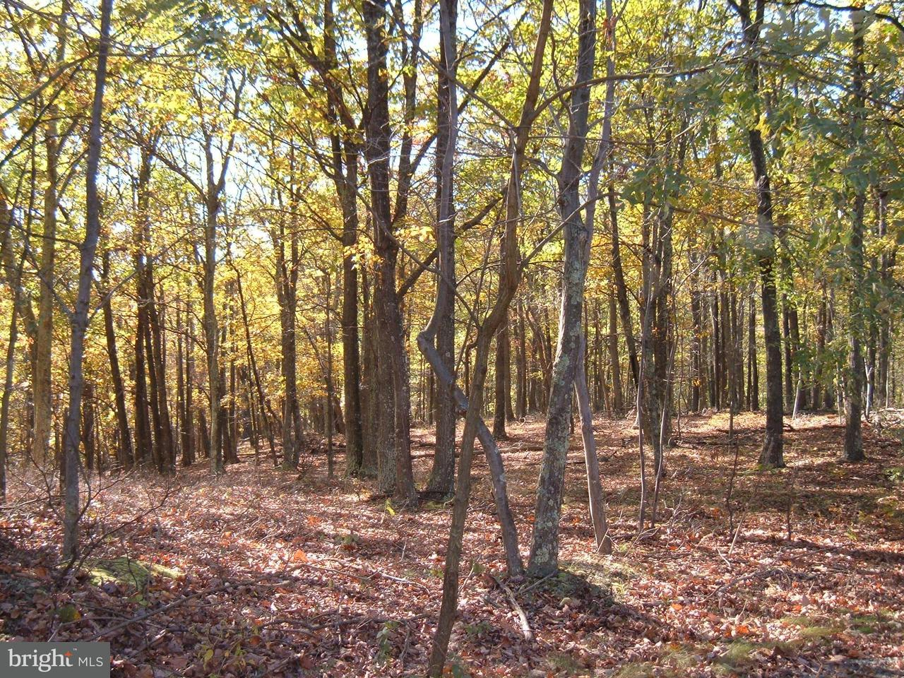 Land for Sale at 17503 Mcmullen Hwy Rawlings, Maryland 21557 United States