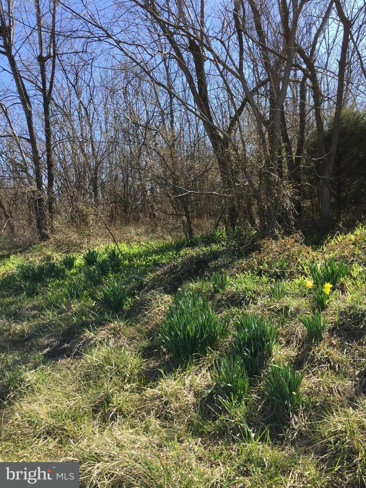 土地,用地 为 销售 在 Martinsburg/Winchester Pike Martinsburg/Winchester Pike Clear Brook, 弗吉尼亚州 22624 美国