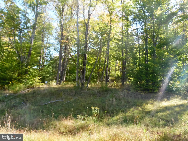 Land for Sale at 73 Hillside Rd Davis, West Virginia 26260 United States