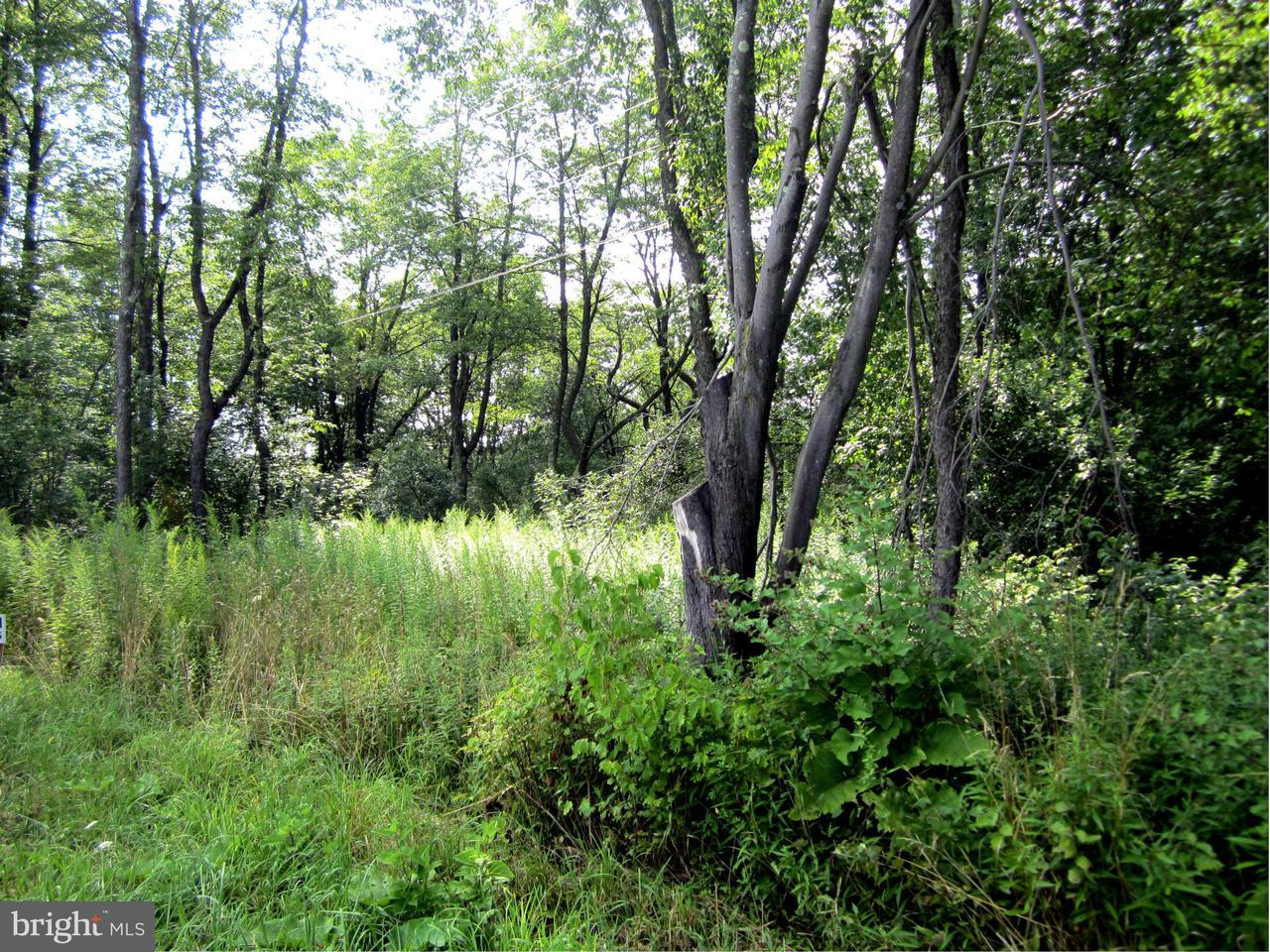 Land for Sale at Steiding Church Rd Swanton, Maryland 21561 United States
