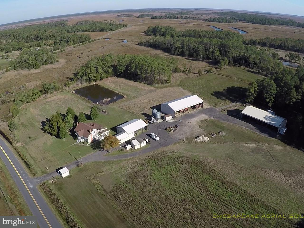 Farm for Sale at 2512 Toddville Rd Crapo, Maryland 21626 United States