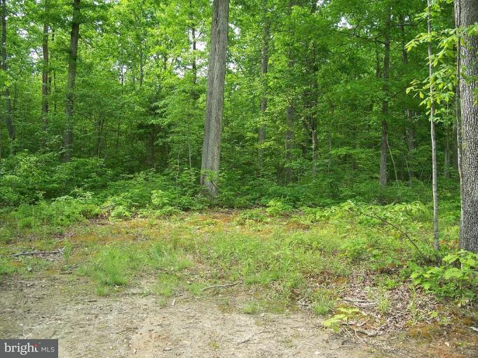 Land for Sale at Off Eleys Ford Rd Lignum, Virginia 22726 United States