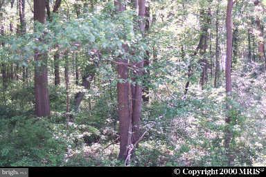 Land for Sale at 40 Rhode Island Ave Earleville, Maryland 21919 United States