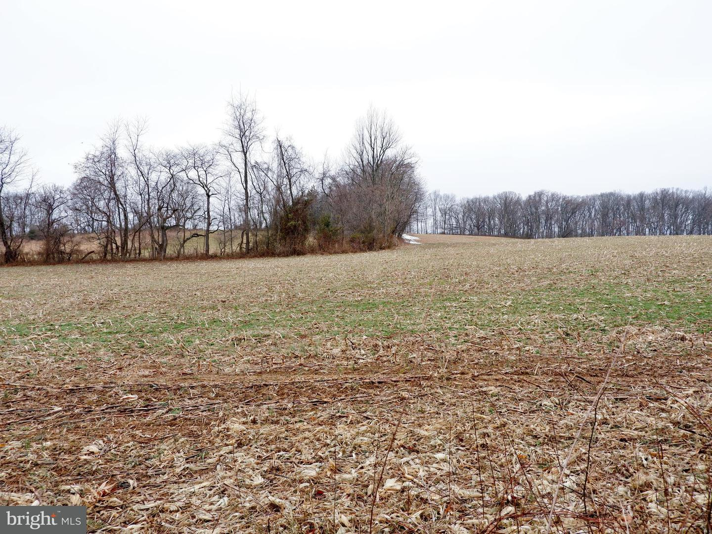 Additional photo for property listing at 40100 Lovettsville Rd  Lovettsville, Virginia 20180 United States