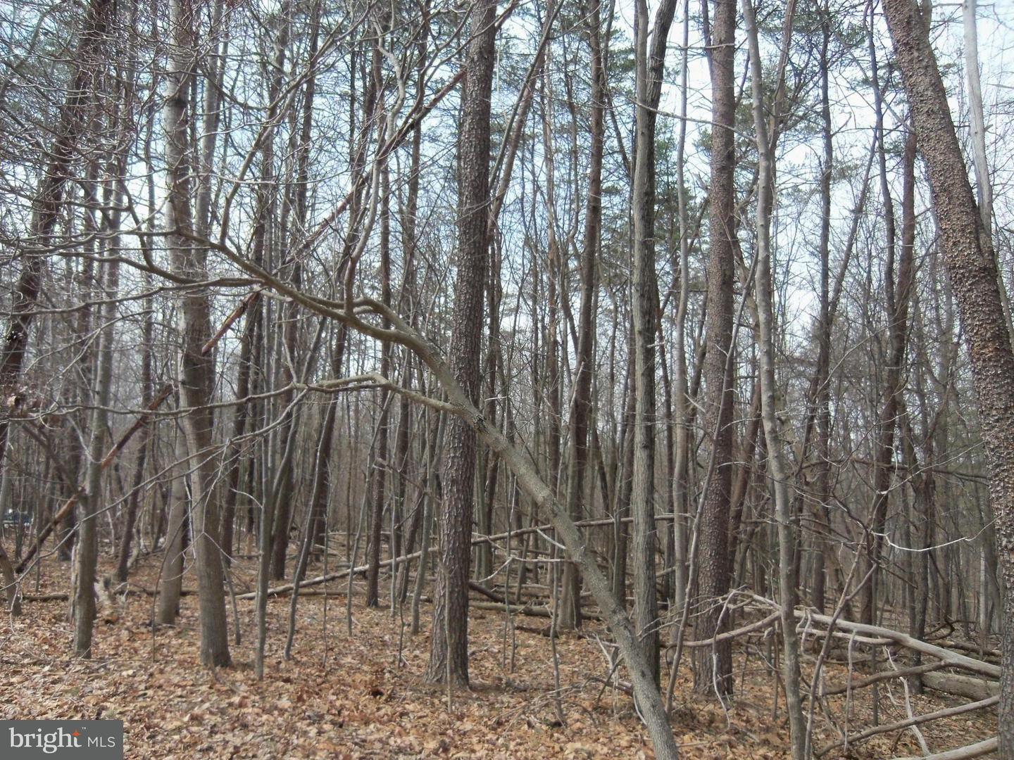 Additional photo for property listing at Tall Pine Rd  Berkeley Springs, West Virginia 25411 United States