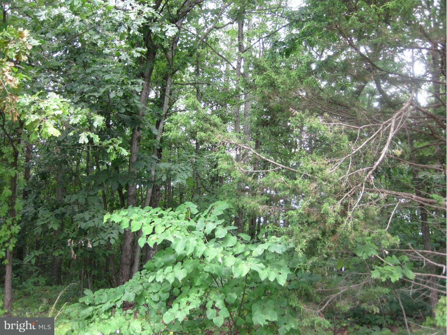 Land for Sale at Basswood Basye, Virginia 22810 United States