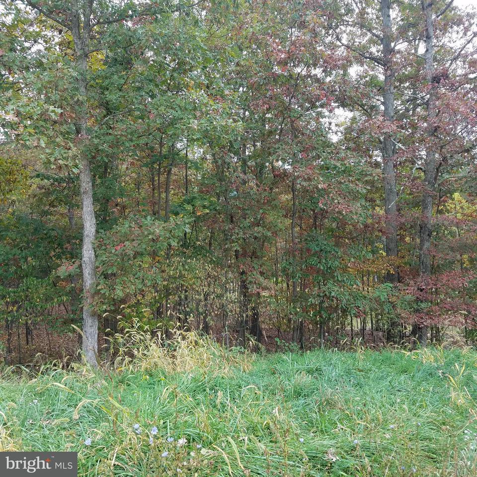 Land for Sale at 13902 Rolling Oak Dr Ellerslie, Maryland 21529 United States