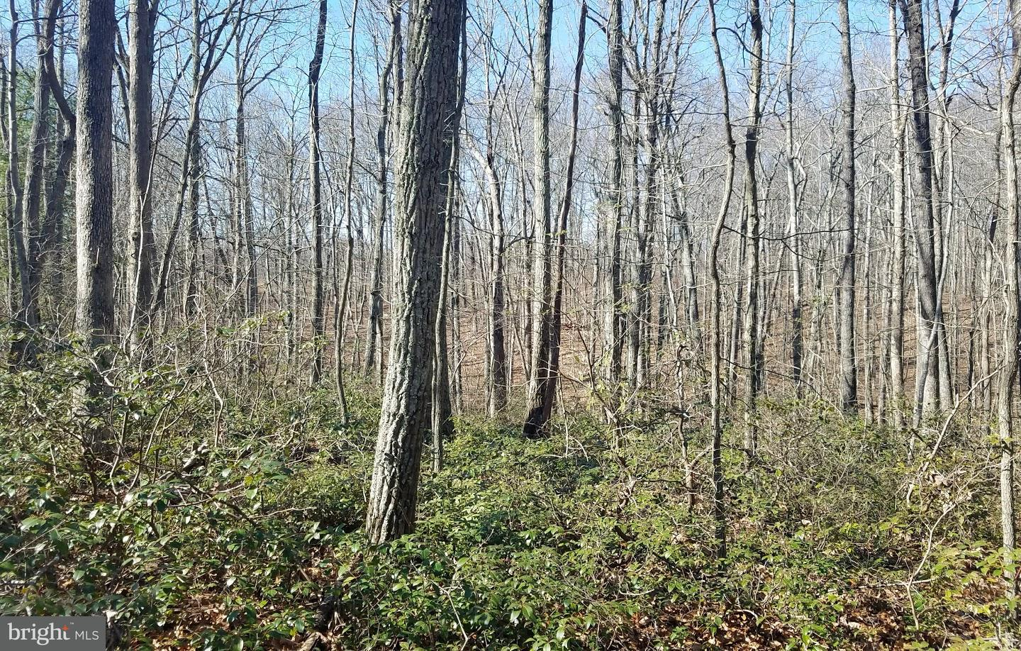 Land for Sale at 0 South Poes Rd Amissville, Virginia 20106 United States