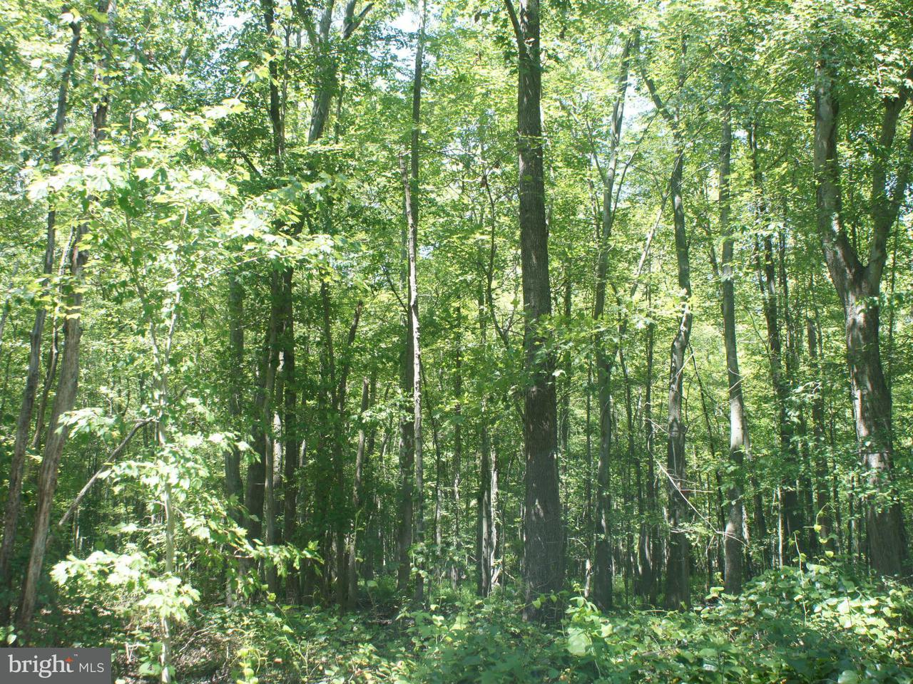 Land for Sale at 923 Forrester Rd Churchton, Maryland 20733 United States