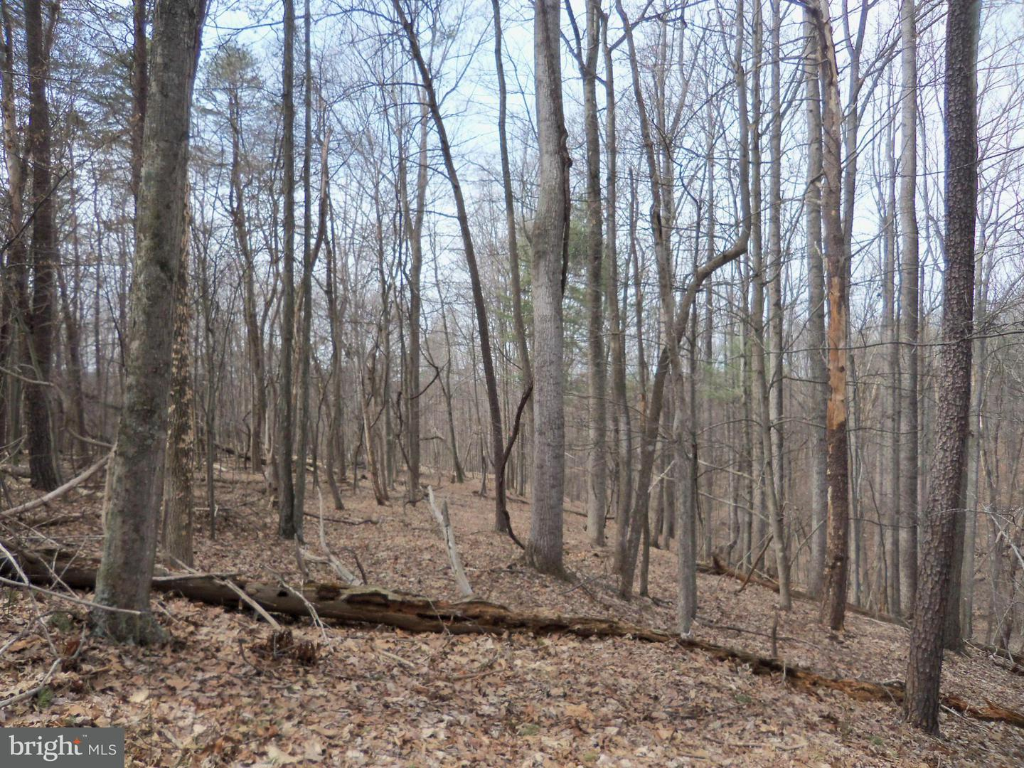 Land for Sale at Tall Pine Rd Berkeley Springs, West Virginia 25411 United States