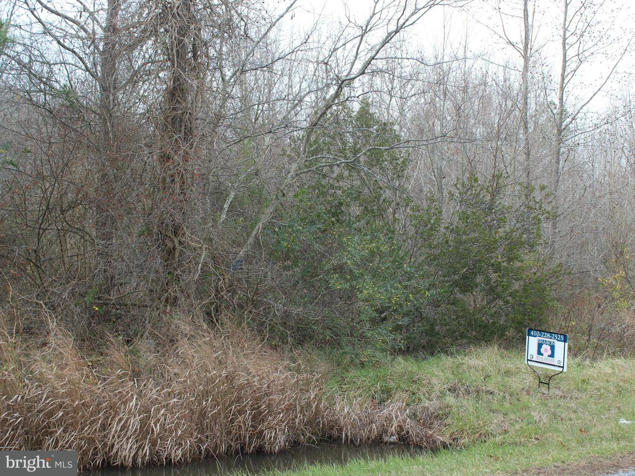 Land for Sale at White Marsh Rd Madison, Maryland 21648 United States