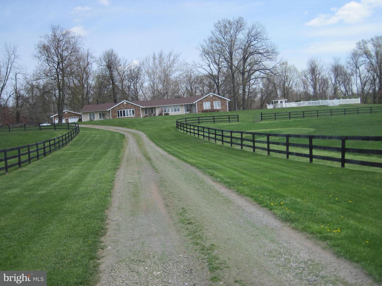 農場 為 出售 在 20269 Trappe Road 20269 Trappe Road Bluemont, 弗吉尼亞州 20135 美國