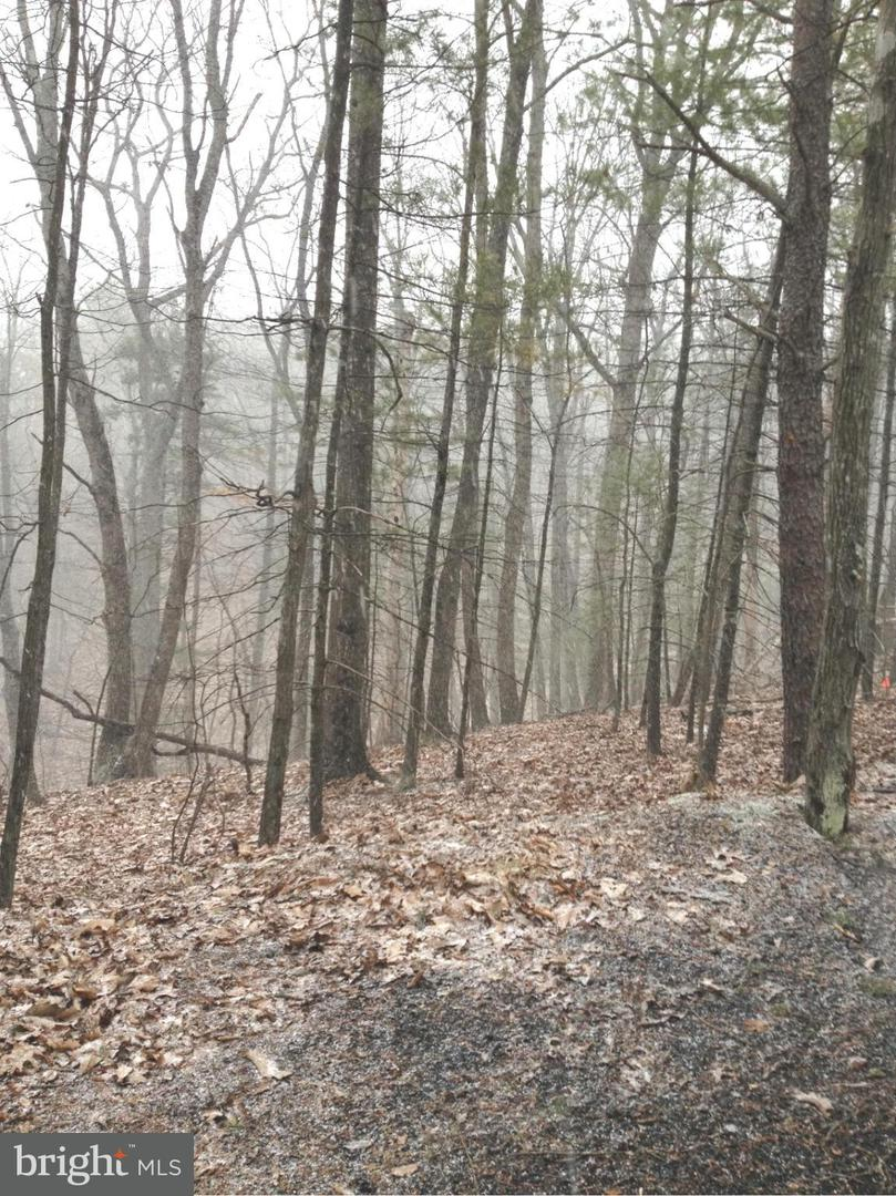 Land for Sale at 0 Deloris Rd Basye, Virginia 22810 United States