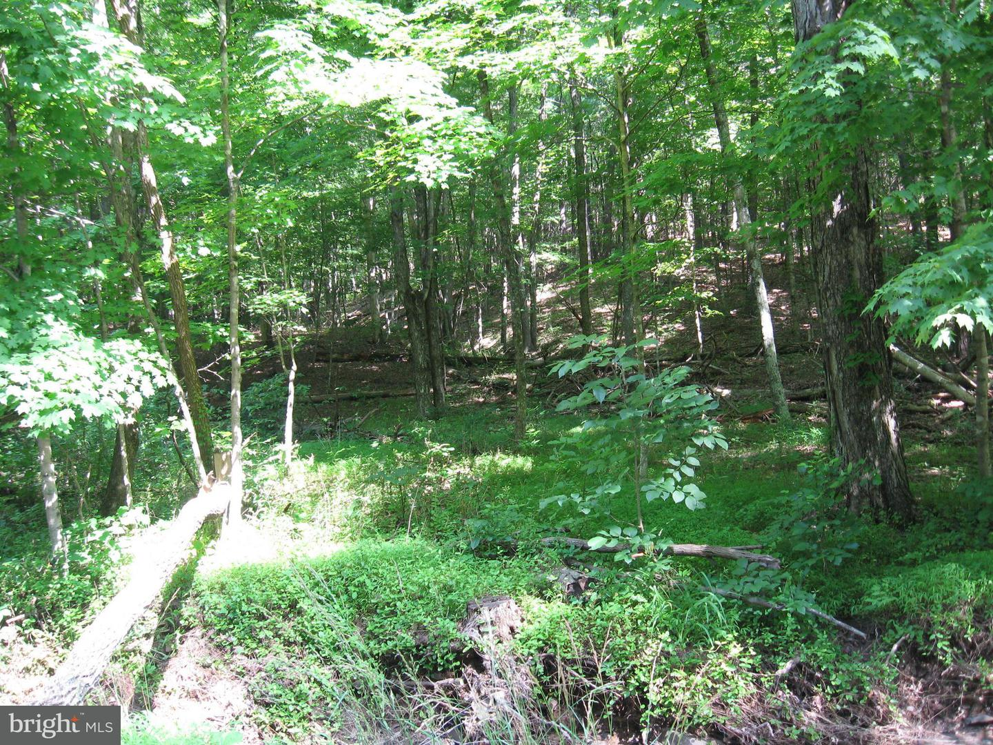 Land for Sale at Mccoy Rd. Berkeley Springs, West Virginia 25411 United States