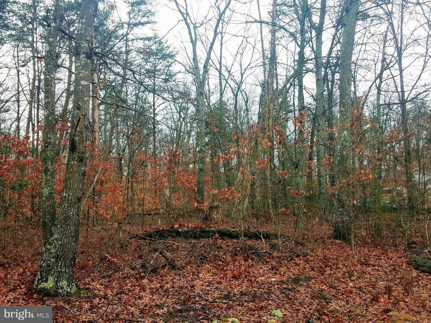 Land for Sale at Shannon Hill Rd Kents Store, Virginia 23084 United States