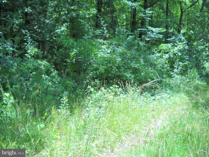 Land for Sale at Lot 16 Oakley Drive Bushwood, Maryland 20618 United States