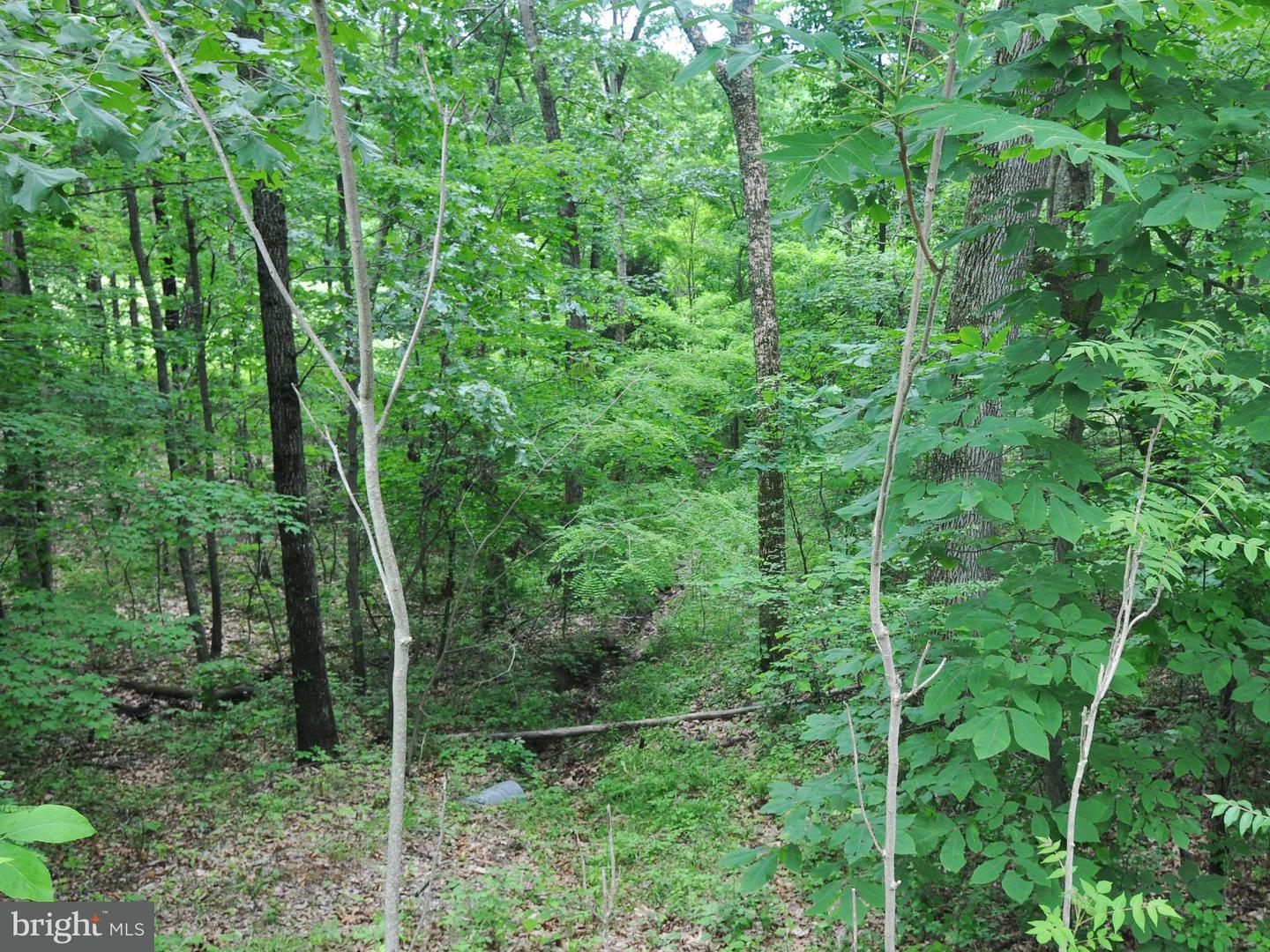 Additional photo for property listing at 124 Country Club Dr  Cross Junction, Virginia 22625 United States