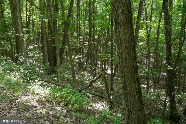 Land for Sale at Dale Basye, Virginia 22810 United States