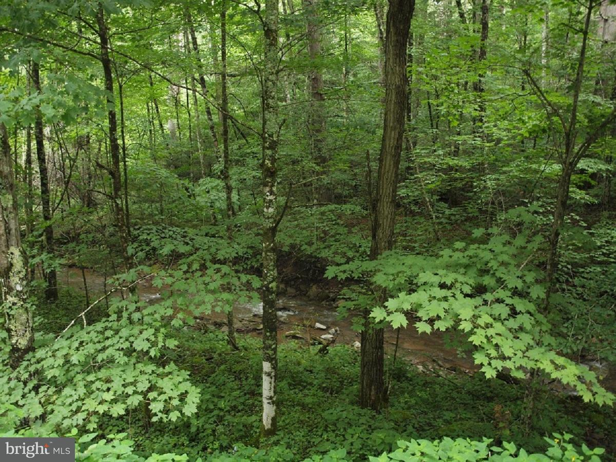 Land for Sale at Hunting Ground Circleville, West Virginia 26804 United States