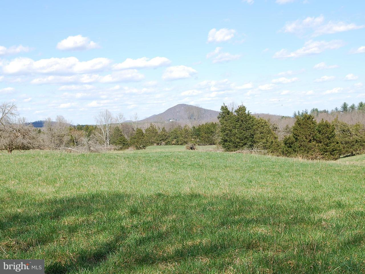 Land for Sale at Turkey Ridge Rd Boston, Virginia 22713 United States