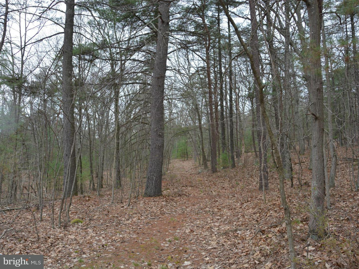 Additional photo for property listing at Lot #5 Cooper Mt View Dr  Capon Bridge, West Virginia 26711 United States