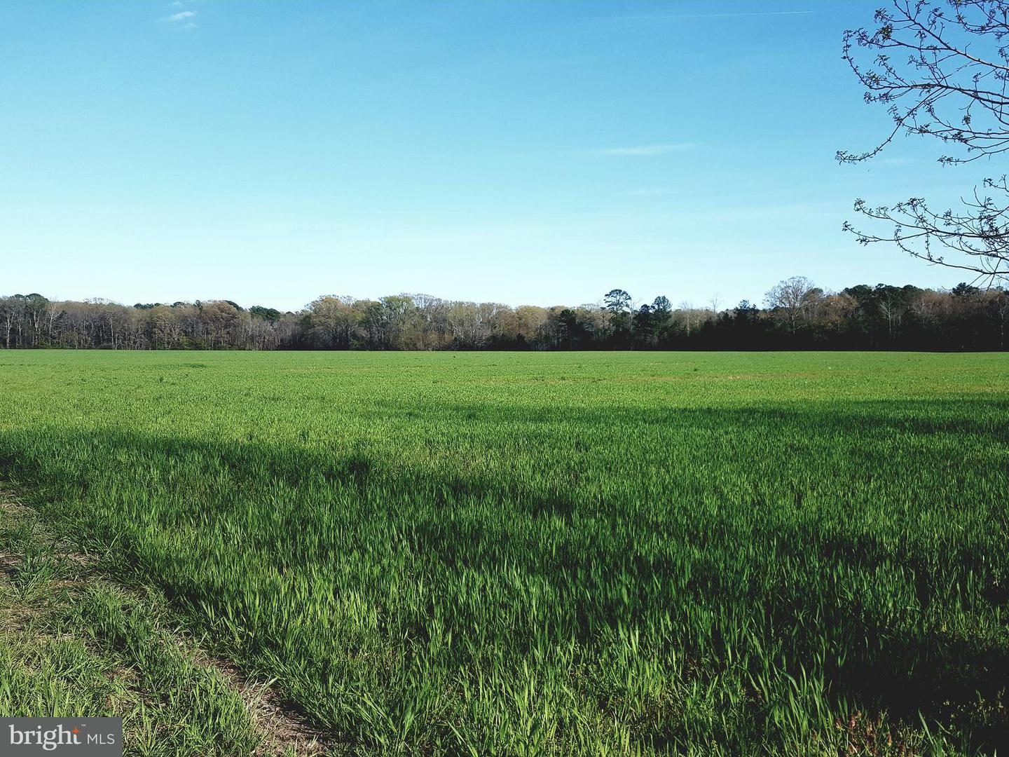 Land for Sale at 17250 Jutland Rd St. Inigoes, Maryland 20684 United States