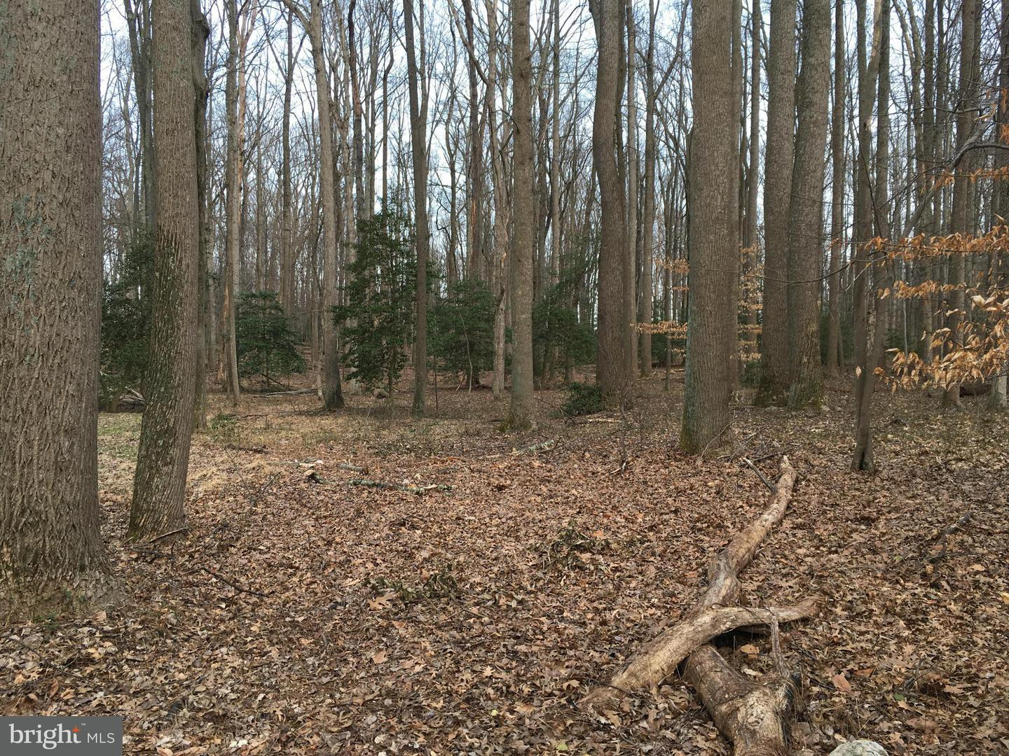 Additional photo for property listing at 501 Haven Ln  Great Falls, Virginia 22066 United States