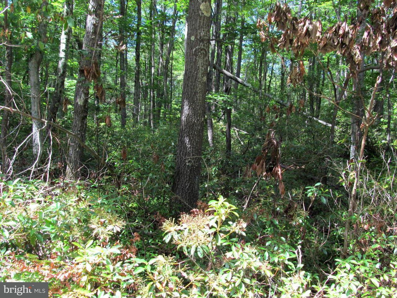 Land for Sale at 7313233 Cub Dr Oakland, Maryland 21550 United States