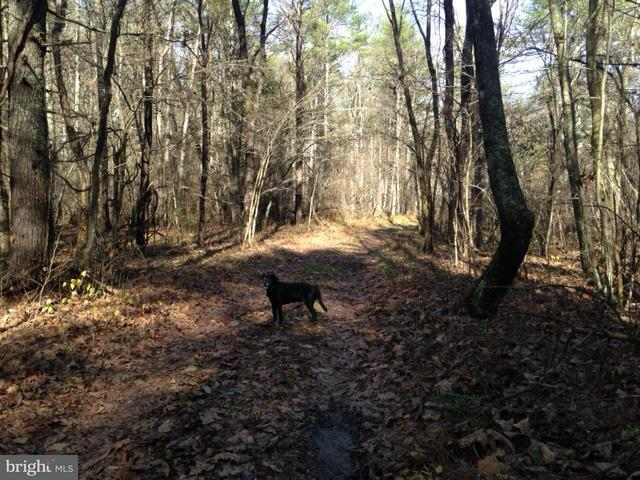 Additional photo for property listing at Routes 606 And 607 - Row  Shenandoah, Virginia 22849 United States
