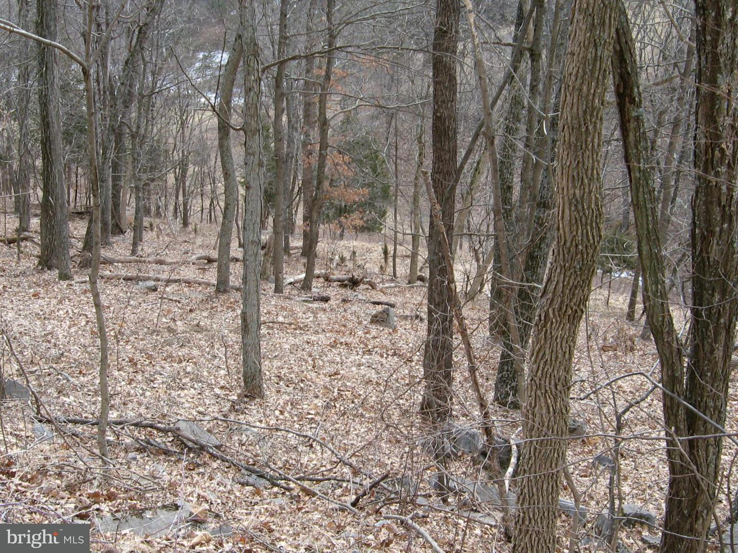 Land for Sale at Highland Springs Rd. Old Fields, West Virginia 26845 United States