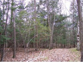 View Vacant Land For Sale at RIVER FOREST HILLS DRIVE, Pulaski, WI