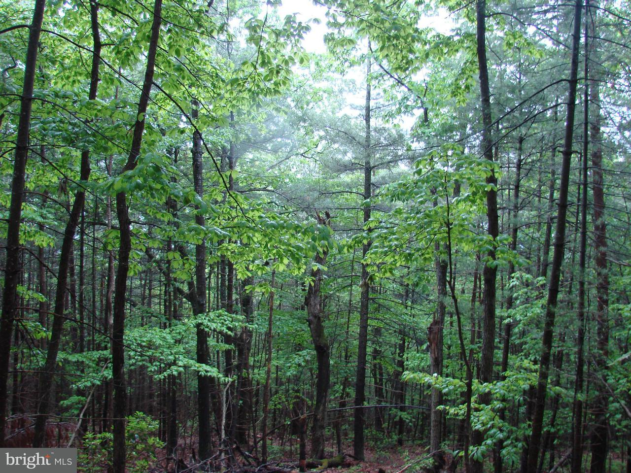 Land for Sale at Piney Mt. Rd. Luray, Virginia 22835 United States