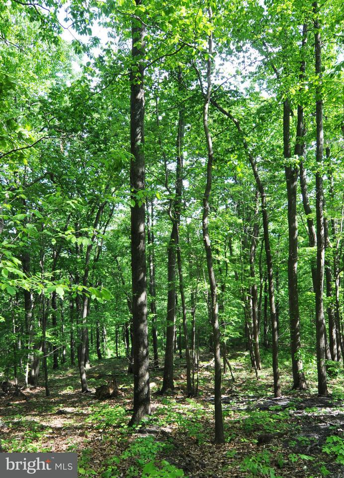 Additional photo for property listing at 7-B Fall Run Rd  Winchester, Virginia 22602 United States
