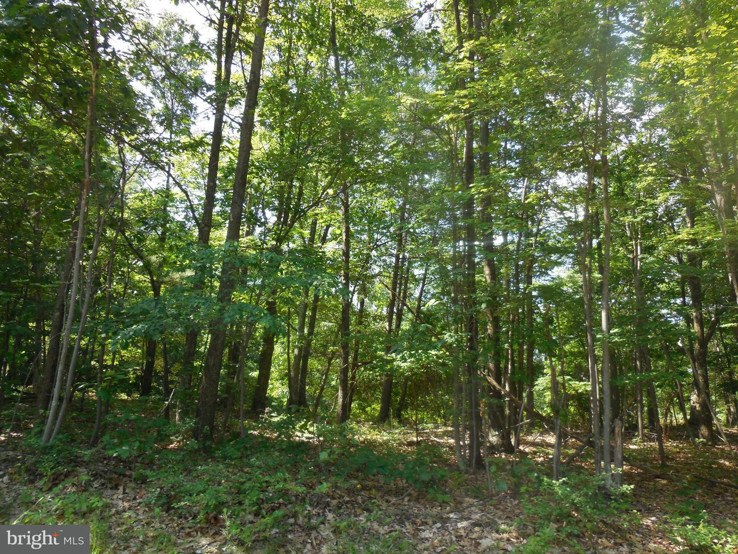 Additional photo for property listing at Duckwall Rd  Berkeley Springs, West Virginia 25411 United States