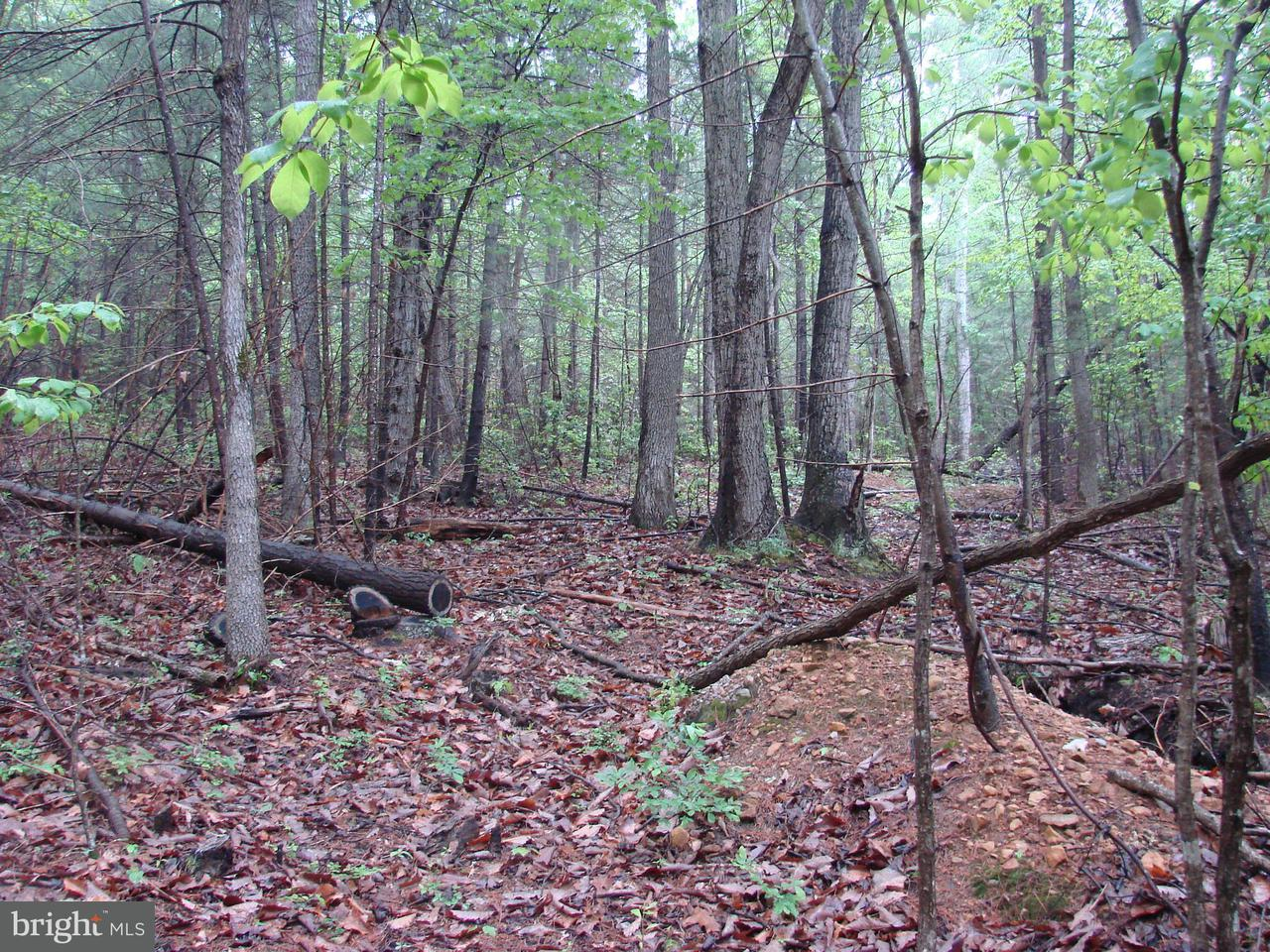 Additional photo for property listing at Piney Mt. Rd.  Luray, Virginia 22835 United States