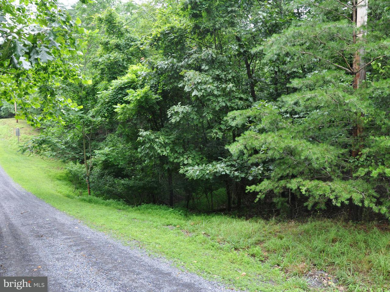 Land for Sale at L-111 Blackberry Ln Gore, Virginia 22637 United States